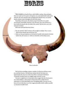 bison horns